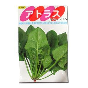 野菜の種/種子 アトラス・ほうれんそう 50ml (メール便可能)|vg-harada