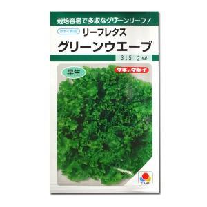 野菜の種/種子 グリーンウエーブ・グリーンウェーブ リーフレタス 2ml (メール便可能)タキイ種苗|vg-harada