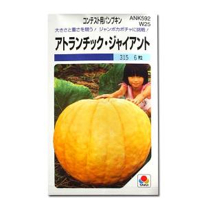 野菜の種/種子 アトランチック ジャイアント・コンテスト用パンプキン かぼちゃ 南瓜 6粒 (メール便可能)タキイ種苗|vg-harada