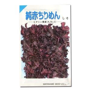 野菜の種/種子 純赤ちりめん・しそ 20ml (メール便発送)|vg-harada