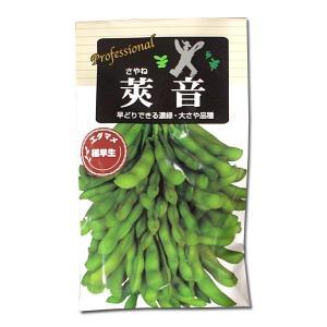 野菜の種/種子 莢音・えだまめ 70ml (メール便可能)|vg-harada