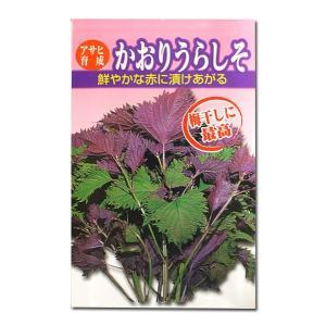 野菜の種/種子 かおりうらしそ 8ml (メール便発送)|vg-harada