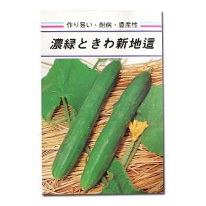 野菜の種/種子 濃緑ときわ新地這・きゅうり 5ml (メール便可能)|vg-harada