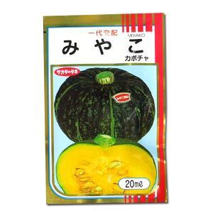 野菜の種/種子 みやこ・カボチャ かぼちゃ 20ml (メール便可能)サカタのタネ|vg-harada