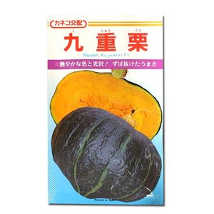 野菜の種/種子 九重栗・カボチャ かぼちゃ 20粒 (メール便可能)|vg-harada