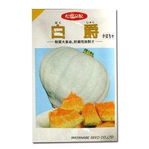 野菜の種/種子 白爵・かぼちゃ カボチャ 11粒 (メール便可能)|vg-harada