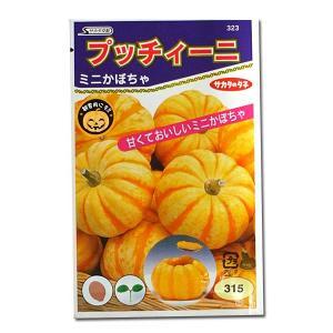 野菜の種/種子 プッチィーニ・ミニカボチャ 7粒 (メール便可能)サカタのタネ|vg-harada