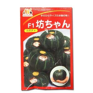 野菜の種/種子 F1坊ちゃん・カボチャ 100粒 (メール便可能/大袋)|vg-harada