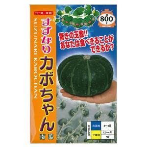 野菜の種/種子 すずなりカボちゃん・カボチャ 20粒 (メール便可能)|vg-harada