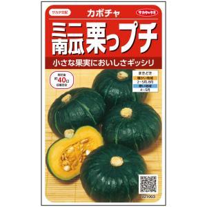 野菜の種/種子 栗坊・ミニかぼちゃ 8粒 (メール便可能)サカタのタネ|vg-harada