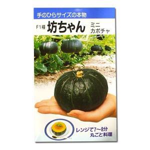 野菜の種/種子 F1種坊ちゃん・ミニカボチャ 10粒 (メール便可能)|vg-harada
