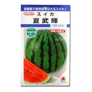 野菜の種/種子 夏武輝・スイカ 11粒 (メール便可能)タキイ種苗|vg-harada
