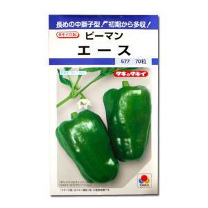 野菜の種/種子 エース・ピーマン 70粒(メール便可能)タキイ種苗|vg-harada