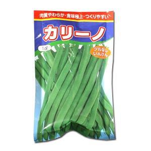 野菜の種/種子 カリーノ・つるなしいんげん 1dl (メール便可能)|vg-harada