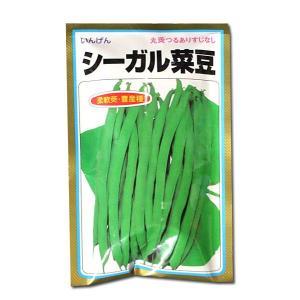 野菜の種/種子 シーガル菜豆・いんげん 1dl  (メール便可能)|vg-harada
