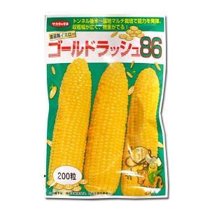 野菜の種/種子 ゴールドラッシュ86・とうもろこし 200粒(メール便発送)サカタのタネ 種苗|vg-harada