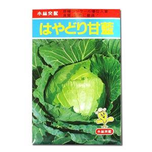 野菜の種/種子 はやどり甘藍・キャベツ 1.5ml (メール便発送)|vg-harada