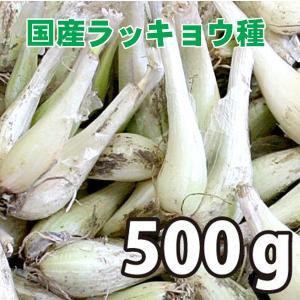 野菜・種/苗 国産ラッキョウ・生もの種 量り売り500g|vg-harada