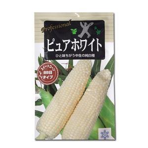 大人気!野菜の種/種子 ピュアホワイト・とうもろこし 200粒 (メール便可能)