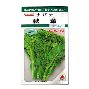 野菜の種/種子 秋華・ナバナ・菜花 6ml(メール便発送)タキイ種苗 vg-harada