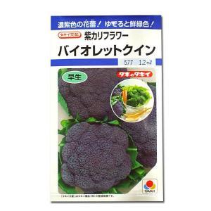 野菜の種/種子 バイオレットクイン・紫カリフラワー 0.7ml(メール便可能)タキイ種苗|vg-harada