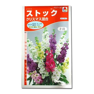 花の種 ストック[クリスマス混合] 0.5ml(メール便可能)|vg-harada