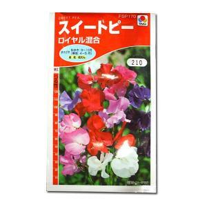 花の種 スイートピー[ロイヤル混合] 3ml(メール便可能)|vg-harada