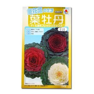花の種 葉牡丹[F1丸葉系フレッシュミックス] 0.3ml(メール便可能)|vg-harada