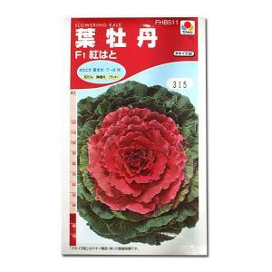 花の種 葉牡丹[F1紅はと] 0.5ml(メール便可能)|vg-harada