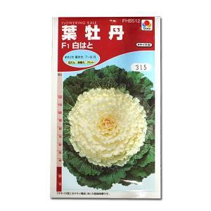 花の種 葉牡丹[F1白はと] 0.5ml(メール便可能)|vg-harada