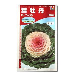 花の種 葉牡丹[F1つぐみ] 0.5ml(メール便可能)|vg-harada