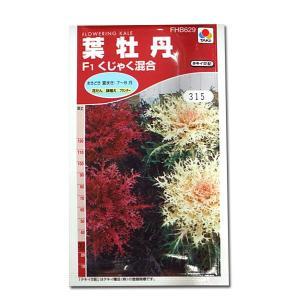 花の種 葉牡丹[F1くじゃく混合] 0.5ml(メール便可能)|vg-harada