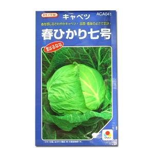 野菜の種/種子 春ひかり七号・キャベツ 2ml(メール便可能)タキイ種苗|vg-harada
