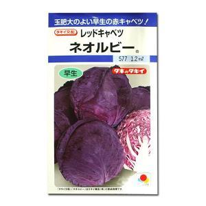 野菜の種/種子 ネオルビー・レッドキャベツ 1.2ml(メール便発送)タキイ種苗|vg-harada