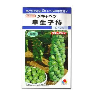 野菜の種/種子 早生子持・メキャベツ 2ml(メール便可能)タキイ種苗|vg-harada