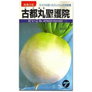 野菜の種/種子 古都丸聖護院・だいこん 9.2ml (メール便可能)|vg-harada