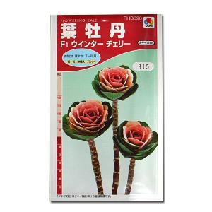 花の種 葉牡丹[F1ウインターチェリー] 0.5ml(メール便可能)|vg-harada