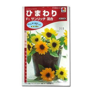 花の種 ひまわり[F1サンリッチ混合] 2ml(メール便可能)|vg-harada