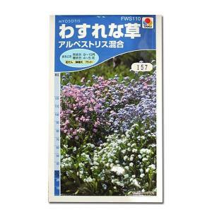 花の種 わすれな草[アルペストリス混合] 0.8ml(メール便可能)|vg-harada