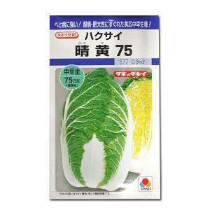 野菜の種/種子 晴黄75・ハクサイ 0.9ml (メール便可能)タキイ種苗|vg-harada
