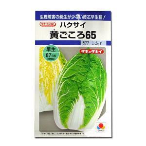 野菜の種/種子 黄ごころ65・ハクサイ 1.2ml (メール便可能)タキイ種苗|vg-harada