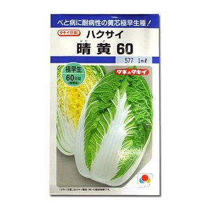 野菜の種/種子 晴黄60・ハクサイ 1ml (メール便可能)タキイ種苗|vg-harada