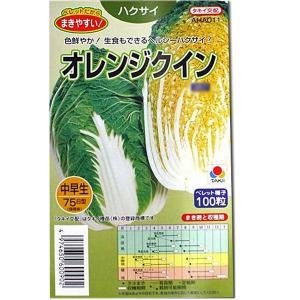 野菜の種/種子 オレンジクイン・ハクサイ 100粒 (メール便可能)タキイ種苗|vg-harada