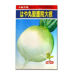 野菜の種/種子 はや丸聖護院大根・だいこん 20ml (メール便可能)|vg-harada
