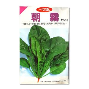 野菜の種/種子 朝霧・ちぢみほうれんそう 50ml (メール便可能)|vg-harada