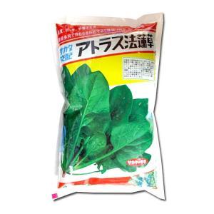 野菜の種/種子 アトラス・ほうれんそう(春・秋・冬)1L  (大袋)サカタのタネ|vg-harada