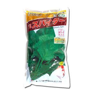 野菜の種/種子 スパイダー・ホウレンソウ 3万粒  (大袋)|vg-harada
