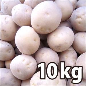 野菜・種/苗 [秋じゃがいも種芋]じゃがいも種芋 出島・生もの種 量り売り10kg|vg-harada