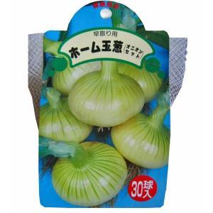 野菜・種/苗 ホームたまねぎ[タマネギ]・ 玉葱 生もの種 種子 量り売り30球 [野菜球根]|vg-harada