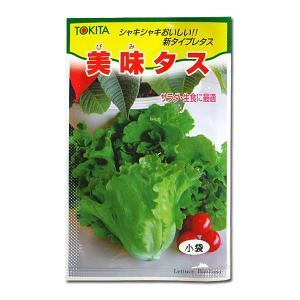 野菜の種/種子 美味タス・レタス 2ml (メール便発送)|vg-harada